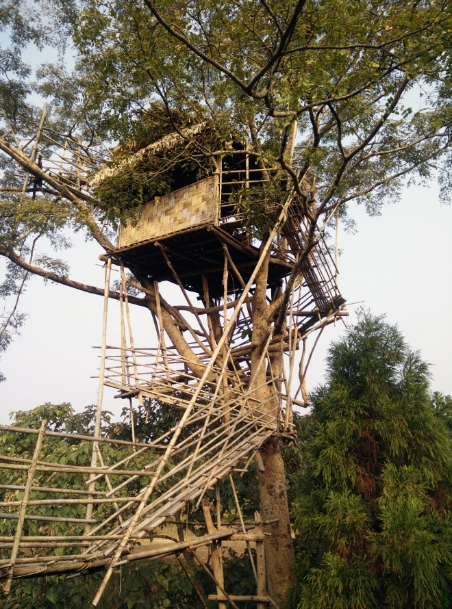 The tree house, where we spent an entire evening gazing at the stars