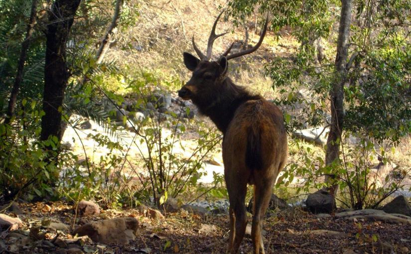 Ranthambore : Into the Wilderness